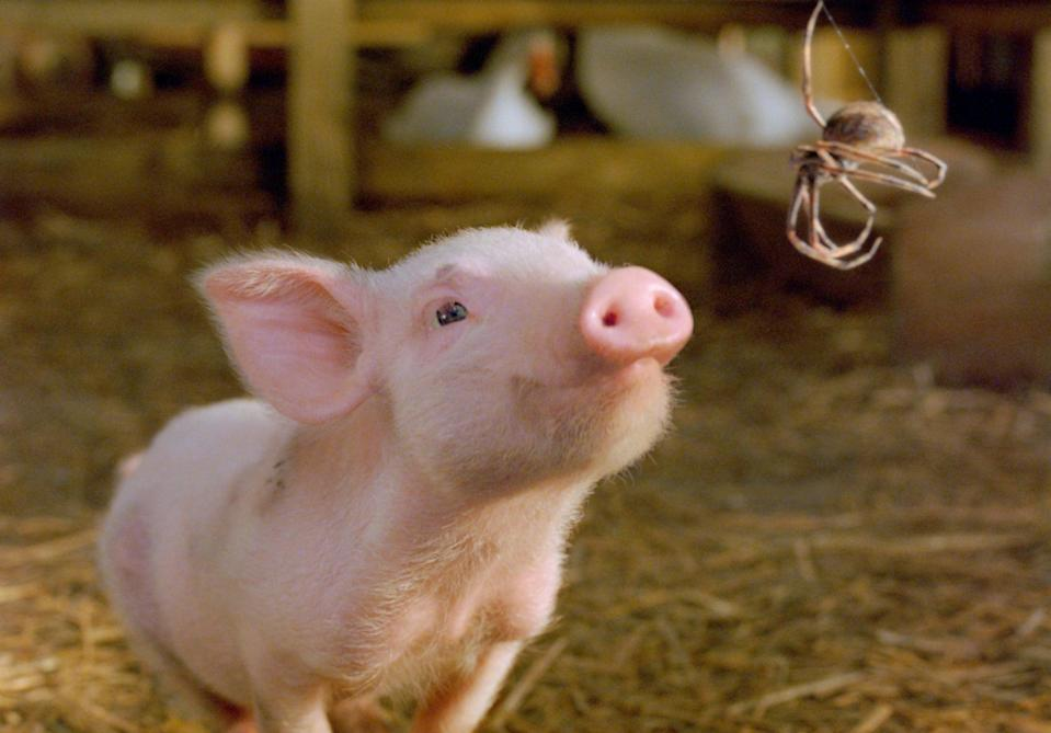 """<p><strong>Netflix's Description:</strong> """"When Wilbur the pig discovers he's destined for the dinner table, kindly spider Charlotte hatches a plan to keep him around.""""</p> <p><a href=""""https://www.netflix.com/title/70041962"""" class=""""link rapid-noclick-resp"""" rel=""""nofollow noopener"""" target=""""_blank"""" data-ylk=""""slk:Stream Charlotte's Web on Netflix!"""">Stream <strong>Charlotte's Web</strong> on Netflix!</a></p>"""