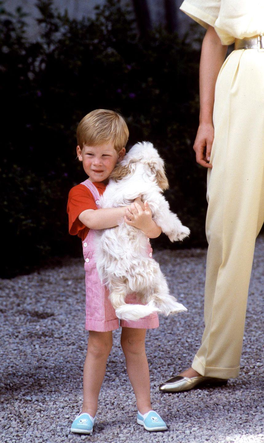 <p>A young Prince Harry carries a dog.</p>
