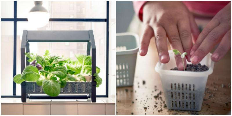 Ikea is now selling a fool proof indoor gardening kit for Indoor gardening for seniors