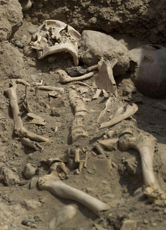 A skeleton lays unearthed in the sports complex where Peru's national soccer team practices in Lima, Peru, Tuesday, Feb. 26, 2013. According to Peru's Ministry of Culture, 11 pre-Inca tombs belonging to the Lima culture (200-700 AD) and Yschma (1100-1400 AD) were located inside the sports complex in the district of San Luis, where excavations started in Dec. 2012. (AP Photo/Martin Mejia)