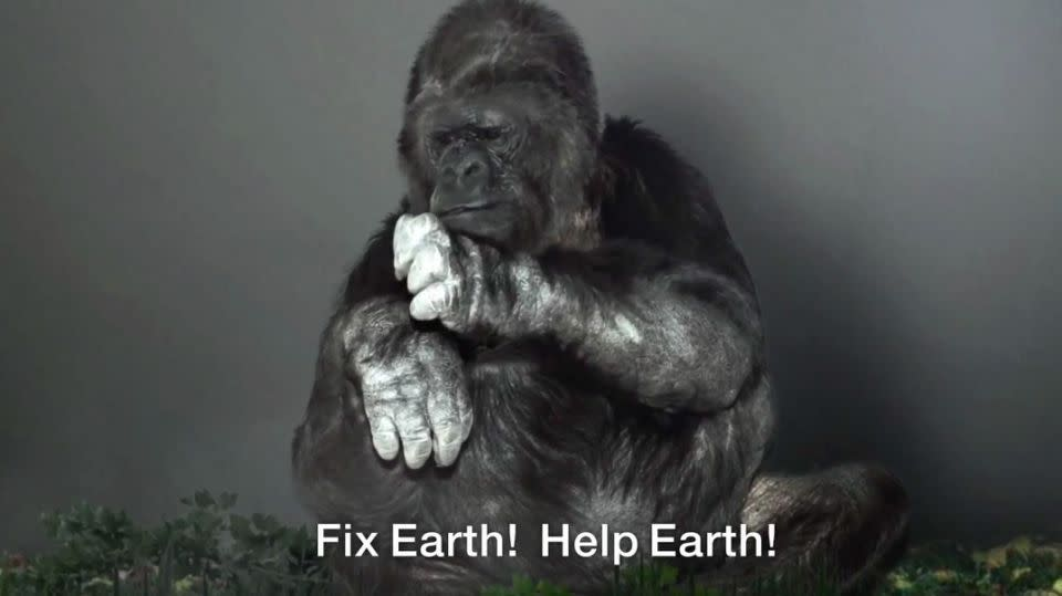 The Gorilla Foundation insists that Koko's message is clear - for mankind to stop harming Earth. Photo: The Gorilla Foundation