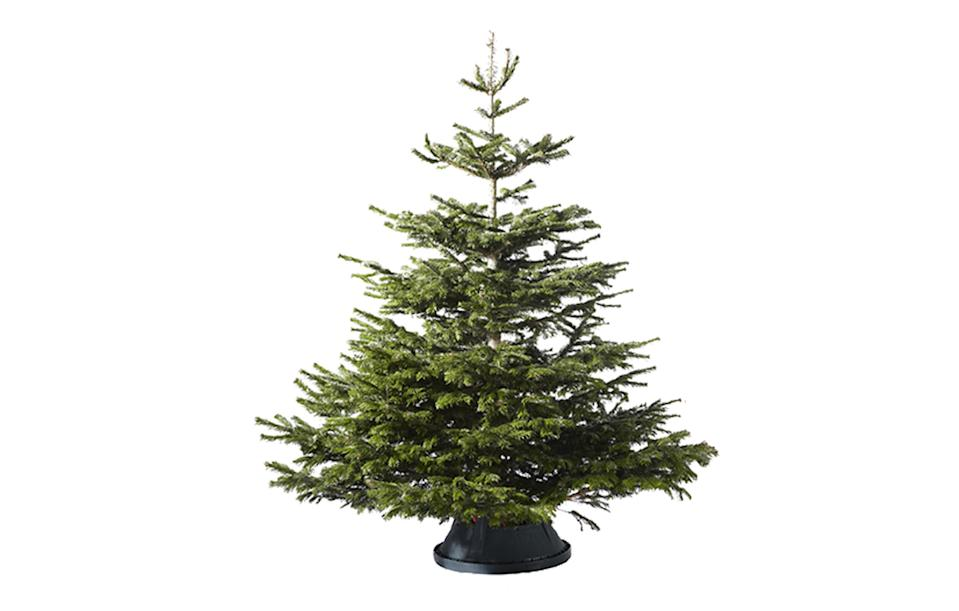 """<p><i><a rel=""""nofollow noopener"""" href=""""http://www.ikea.com/gb/en/ikea/christmas-trees/"""" target=""""_blank"""" data-ylk=""""slk:Ikea, £25"""" class=""""link rapid-noclick-resp"""">Ikea, £25</a>. Receive a £20 voucher to spend in-store after Christmas.</i><br><br></p>"""