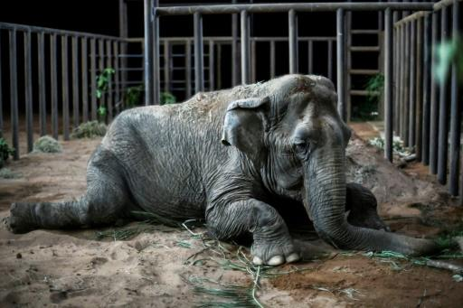 Worldwide, abot 40 countries have fully or partially banned the use of wild animals in circuses
