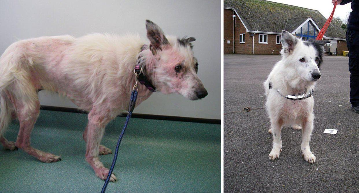 Owners who neglected dog until she 'scratched herself raw