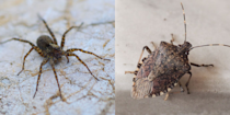 <p>Bugs belong outside—but they somehow <em>always</em> make their way into a crack or crevice you weren't expecting. And when they do, spotting one in your home can range from eye-roll inducing to majorly freaky. The good news: Most house bugs won't harm you. In fact, they're likely more afraid of you than you are of them.</p><p>You may notice more insects lurking about during a major season change, after a heavy rain sets in, or if you have food lying around—and even though most of bugs shouldn't concern you, you probably want to identify and get rid of them ASAP for your own peace of mind.</p><p>So, we turned to several entomologists and pest control experts to help us round up a list of creepy crawlers you can find living in your home. From invasive species to weird-looking spiders to brightly-colored beetles, here are the most common house bugs to know, how to identify them, and whether or not you should worry if you spot one.</p>