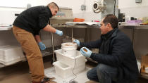In this Oct. 30, 2016, photo provided by Val Kreil Chris Dankmeyer, left, with the Maniilaq Health Association, and Chris Sannito, with the Kodiak Seafood and Marine Science Center, work with seal blubber in Kotzebue, Alaska. The Maniilaq Association in Kotzebue has received state approval to process and serve seal oil at its elder care facility in Kotzebue, believed to be a first for seal oil in the U.S. (Val Kreil via AP)