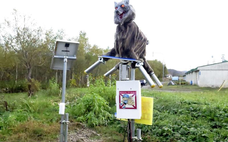 Robot 'monster wolf' sees off Japan's aggressive bears