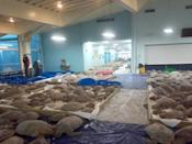 """<p>A team of volunteers has been <a href=""""https://people.com/pets/thousands-of-turtles-rescued-from-freezing-texas-waters/"""" rel=""""nofollow noopener"""" target=""""_blank"""" data-ylk=""""slk:working to rescue thousands of &quot;cold-stunned&quot; turtles"""" class=""""link rapid-noclick-resp"""">working to rescue thousands of """"cold-stunned"""" turtles</a> from the unprecedented storm. </p> <p>Over the last week, more than 4,000 turtles have been found and rehabilitated from freezing waters by Sea Turtle, Inc., a conservation group in South Padre Island, <a href=""""https://www.cbsnews.com/news/4000-cold-stunned-sea-turtles-rescue-freezing-texas-winter-storm/"""" rel=""""nofollow noopener"""" target=""""_blank"""" data-ylk=""""slk:CBS News reported."""" class=""""link rapid-noclick-resp"""">CBS News reported.</a></p>"""