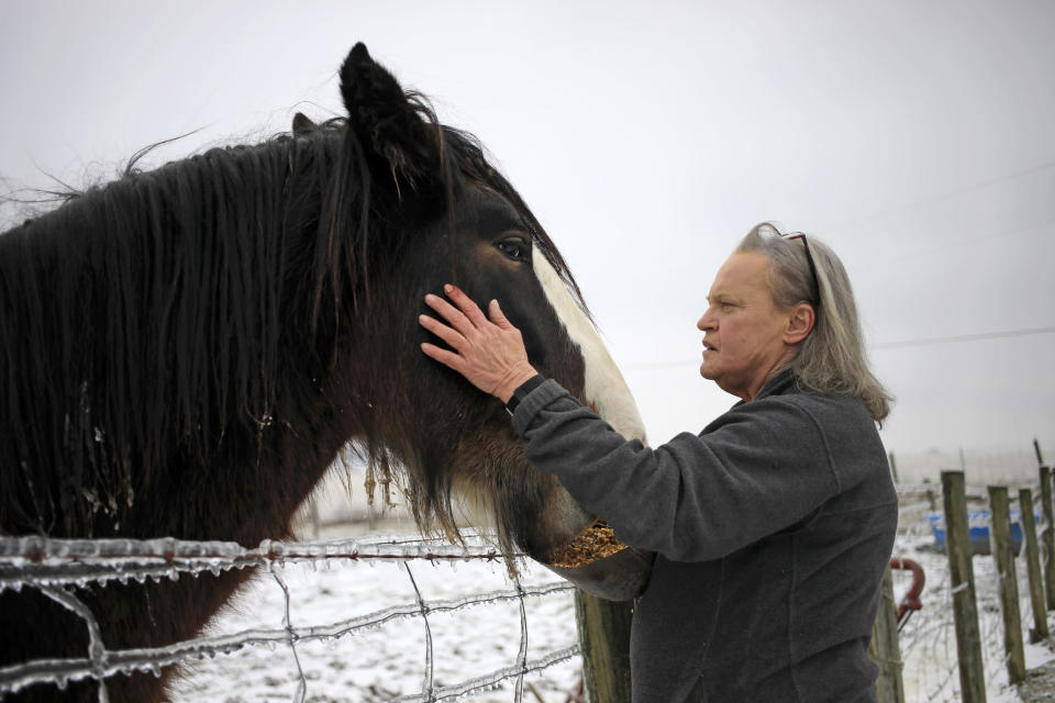 Kim Johnson with her Cydesdale, Nitro. (Luke Sharrett / for NBC News)