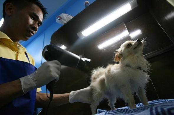 The Philippines sees a boost in doggie spas and hotels