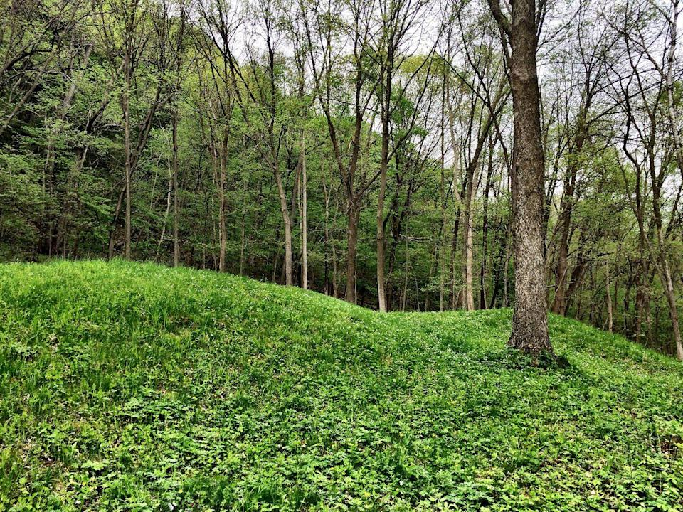 """<p>Near Harpers Ferry, Iowa, you might be surprised to learn that there's a treasure trove of Native American history found in the <a href=""""https://www.tripadvisor.com/Attraction_Review-g60797-d117304-Reviews-Effigy_Mounds_National_Monument-Harpers_Ferry_Iowa.html"""" rel=""""nofollow noopener"""" target=""""_blank"""" data-ylk=""""slk:Effigy Mounds National Monument"""" class=""""link rapid-noclick-resp"""">Effigy Mounds National Monument</a>. Traverse bridges and a mix of paved and grass-covered paths to see the area's 191 effigy mounds.</p><p><br><a class=""""link rapid-noclick-resp"""" href=""""https://go.redirectingat.com?id=74968X1596630&url=https%3A%2F%2Fwww.tripadvisor.com%2FAttraction_Review-g60797-d117304-Reviews-Effigy_Mounds_National_Monument-Harpers_Ferry_Iowa.html&sref=https%3A%2F%2Fwww.countryliving.com%2Flife%2Ftravel%2Fg24487731%2Fbest-hikes-in-the-us%2F"""" rel=""""nofollow noopener"""" target=""""_blank"""" data-ylk=""""slk:PLAN YOUR HIKE"""">PLAN YOUR HIKE</a></p>"""