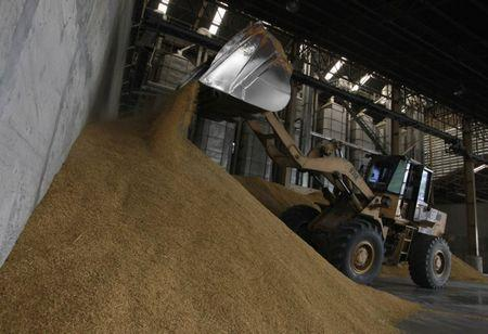 A worker unloads paddy rice in a government warehouse in Ayutthaya province, nearly 80 km (50 miles) north of Bangkok August 7, 2012. REUTERS/Sukree Sukplang/Files