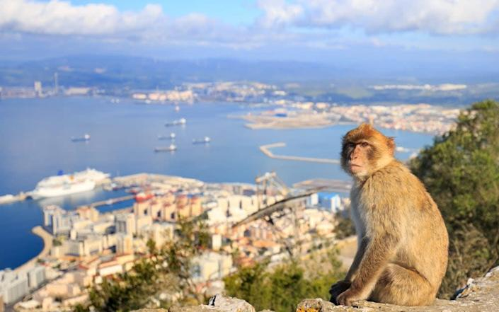 The Barbary macaques are Gibraltar's most famous residents - Getty