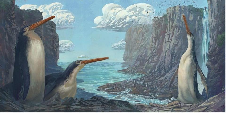 idThe bird's longer than usual legs influenced how fast it could swim and how deep it could dive, the researchers sa (Simone Giovanardi)