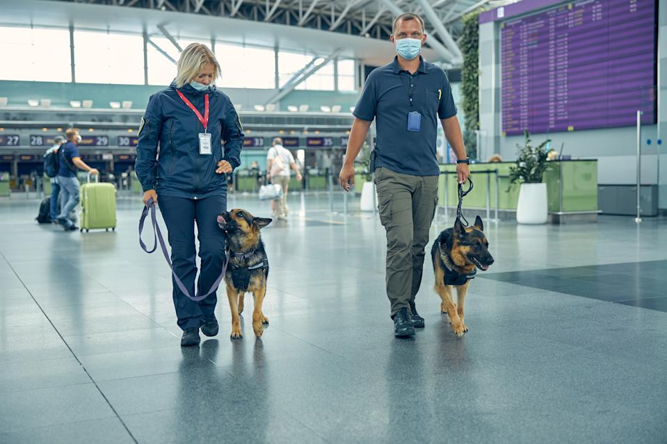 Male and female officers in medical masks strolling down airport terminal hall with German Shepherd dogs