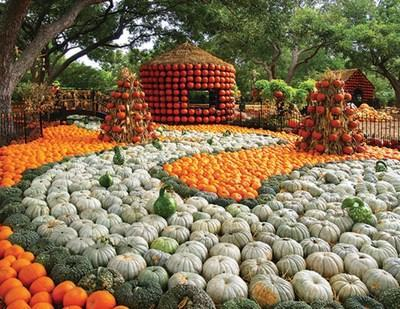"Autumn at the Arboretum, presented by Reliant, highlights the nationally acclaimed Pumpkin Village featuring four 20-foot-tall decorated pumpkin houses and creative displays fashioned from more than 90,000 pumpkins, gourds and squash. With the theme ""The Art of the Pumpkin,"" the Dallas Arboretum's popular festival opens on September 19 and runs through November 1."