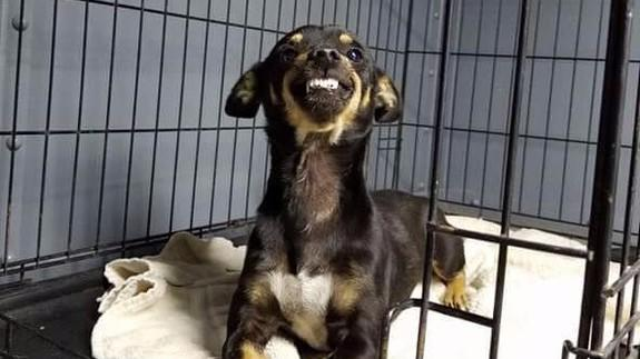 Smiling shelter dog goes viral and gets a forever home