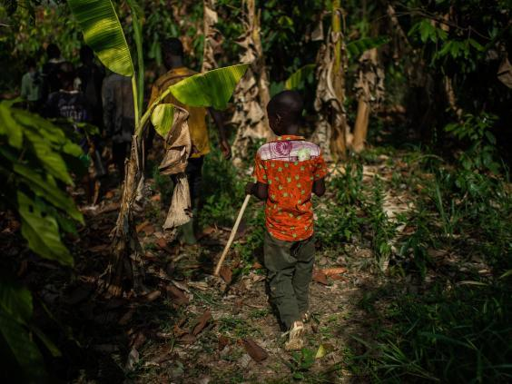 A young boy from Burkina Faso follows other children as they leave the cocoa farm where they work