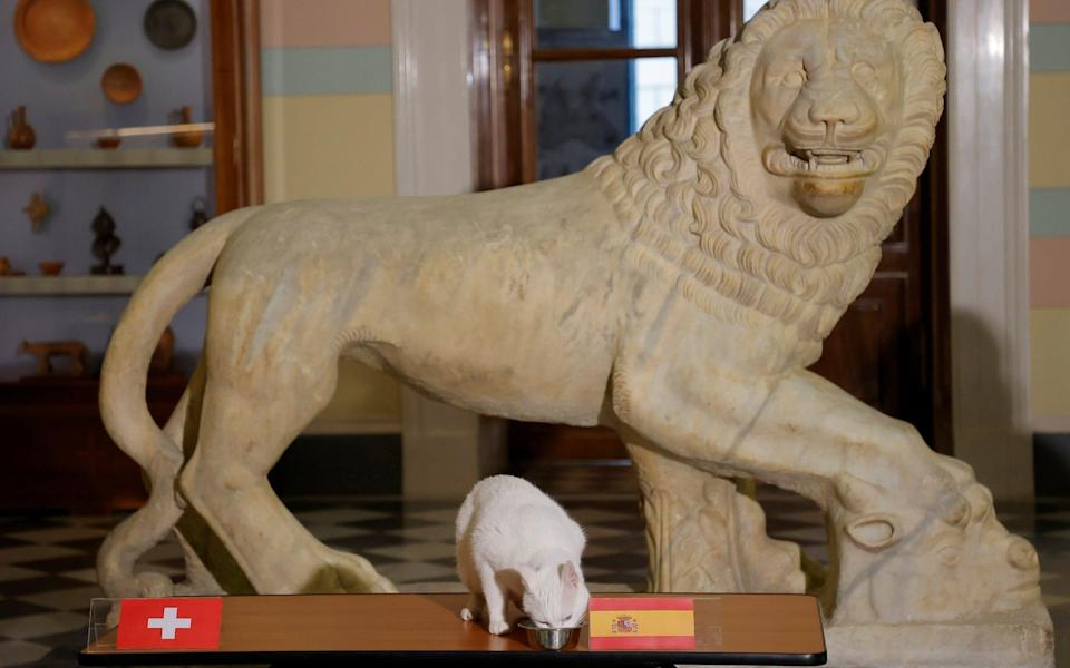 Achilles the cat, that lives in St. Petersburg's Hermitage museum, chooses Spain while attempting to predict the result of the UEFA Euro 2020 quarter final match between Switzerland and Spain during an event in Saint Petersburg, - REUTERS