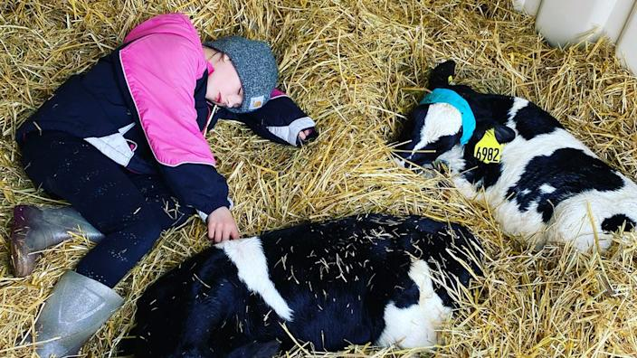 Katy Schultz's daughter spends time with the calves at her farm