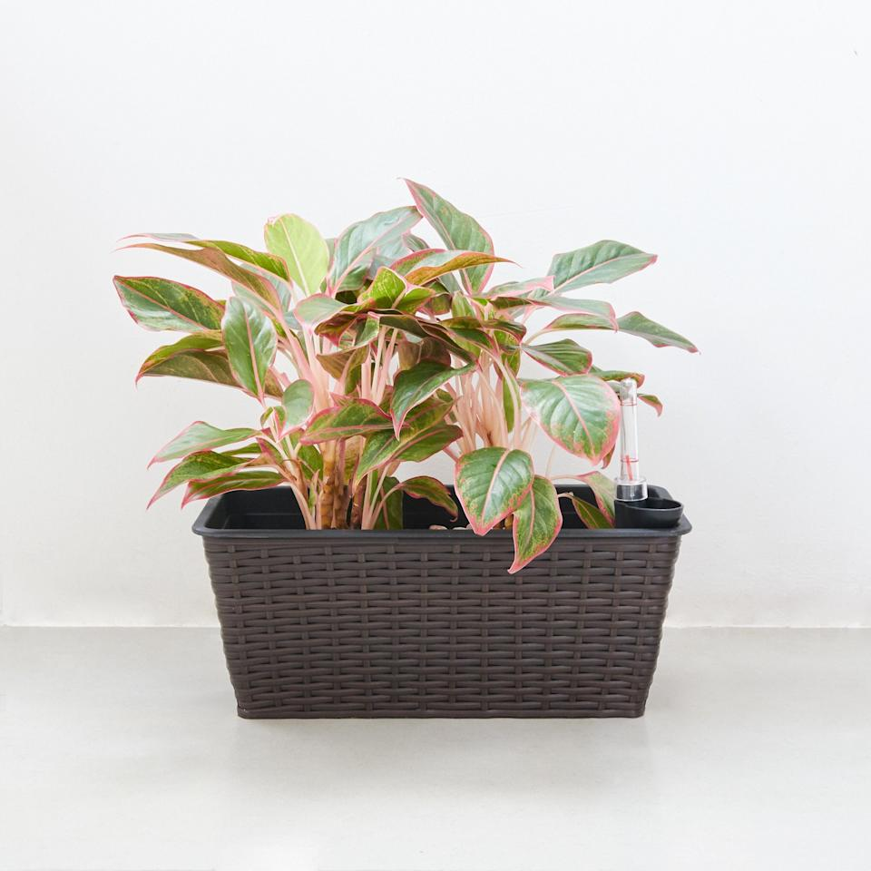 """<h2>Bay Isle Home Denny Self-Watering Resin Pot Planter</h2><br><strong>Best For: Rustic Flare</strong><br>If you like the hi-tech nature of self-watering planters but want to maintain a classic farmhouse aesthetic, this wicker planter will give you the best of both worlds. <br><br><em>Shop</em> <strong><em><a href=""""https://www.wayfair.com/brand/bnd/bay-isle-home-b39299.html"""" rel=""""nofollow noopener"""" target=""""_blank"""" data-ylk=""""slk:Bay Isle Home"""" class=""""link rapid-noclick-resp"""">Bay Isle Home</a></em></strong><br><br><strong>Bay Isle Home</strong> Denny Self-Watering Resin Pot Planter, $, available at <a href=""""https://go.skimresources.com/?id=30283X879131&url=https%3A%2F%2Fwww.wayfair.com%2Foutdoor%2Fpdp%2Fbay-isle-home-denny-self-watering-resin-pot-planter-w004930472.html"""" rel=""""nofollow noopener"""" target=""""_blank"""" data-ylk=""""slk:Wayfair"""" class=""""link rapid-noclick-resp"""">Wayfair</a>"""