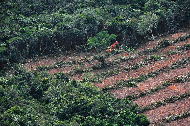Trees are cleared in Central Kalimantan province on Indonesia's Borneo Island, in this photo by Greenpeace in 2014