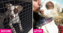 """<p>Charlotte was around two months old when she and her siblings were rescued from a parking lot in Manati, Puerto Rico by the NY-based <a href=""""https://www.thesatoproject.org/"""" rel=""""nofollow noopener"""" target=""""_blank"""" data-ylk=""""slk:Sato Project"""" class=""""link rapid-noclick-resp"""">Sato Project</a>. Charlotte was flown to New Jersey where she wasted no time adapting to her new surroundings. She has her own <a href=""""https://www.instagram.com/apuppynamedcharlotte/"""" rel=""""nofollow noopener"""" target=""""_blank"""" data-ylk=""""slk:Instagram"""" class=""""link rapid-noclick-resp"""">Instagram</a> account where she advocates for the adoption of rescue dogs who come from similar backgrounds. </p>"""