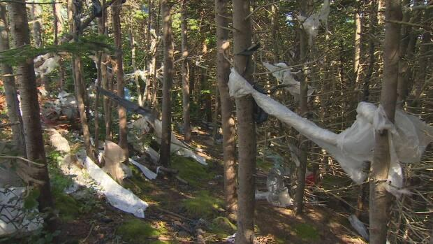 Retail bags and other plastics cling to trees near the Robin Hood Bay Landfill in St. John's. Newfoundland and Labrador implemented a ban on retail plastic bags on Oct. 1, 2020. (CBC - image credit)