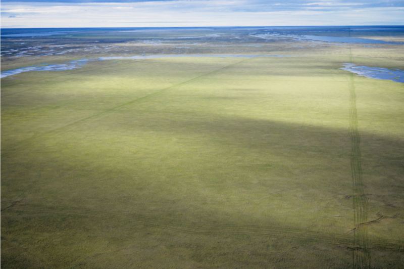 This 2006 photo shows seismic tracks on the tundra near Teshekpuk Lake, Alaska. (Subhankar Banerjee)