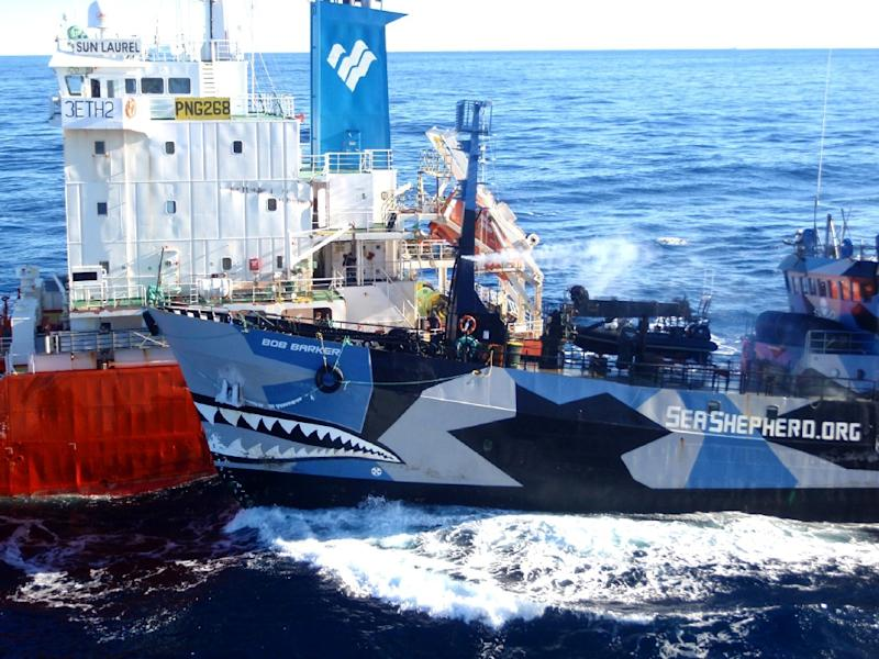 The arch enemies have waged a legal and public relations battle as Sea Shepherd has sought to disrupt an annual whale hunt in the Antarctic that Japan defends as scientific research (AFP Photo/Institute of Cetacean Research)