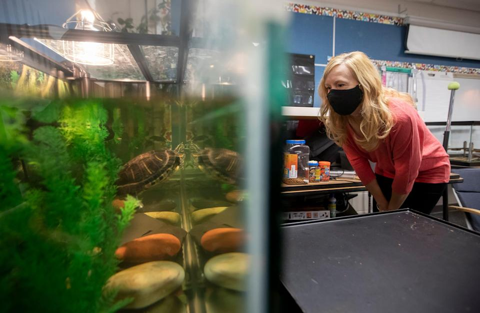 Katie Guehl, a fourth grade teacher at Indian Run Elementary School in Dublin, Ohio, looks in on Daphne Phyllis, a red-eared slider turtle, inside her classroom April 13, 2021. Guehl has had to increase her hands-on care of the turtle, which has been in her care for more than 20 years, during the pandemic due to not having kids in the classroom to help.