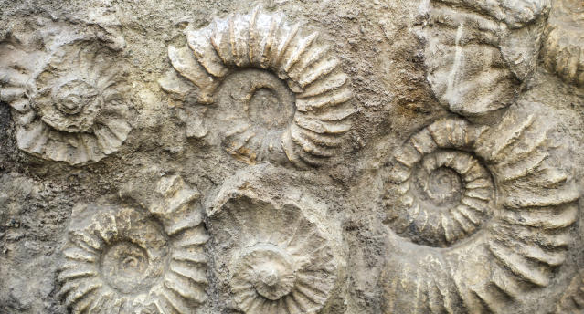 6-year-old girl discovers a 65-million-year-old fossil. (Photo: Getty Images)