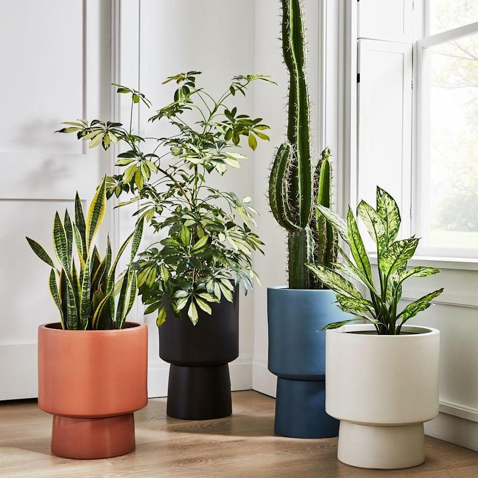 """<p>""""I potted a medium-sized fiddle leaf fig plant I purchased separately in this <span>West Elm Bishop Pedestal Planters</span> ($130), and am so happy with how it looks. When I say this pot is giant, I mean it is g.i.a.n.t. so I know my plant has plenty of room to grow in this gorgeous pot. It's such a statement piece and I love that it's versatile enough to work indoors or outside."""" - KK</p>"""