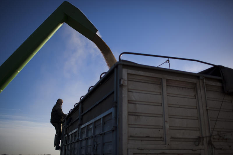 In this July 14, 2012 photo, trucker Miguel Gospodneich watches soybeans kept in a portable silo bag being loaded into his truck to be transported for sale at a farm near Pergamino, Argentina. China is the leading buyer of Argentine soybeans, with most of the country's fertile land nowadays covered with the crop, its principal export. As Chinese ate more pork, fried chicken and hamburgers, increasing the demand for soybeans to make cooking oil and feed for pigs and cows, cattle ranchers in Latin America turned grazing land into fields of soy, a crop few in their region consume. (AP Photo/Natacha Pisarenko)