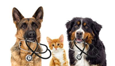 Trusted Online Resource WebMD Launches Pet Health Channel – Fetch by WebMD – with Nutri-Vet as the Exclusive Pet Wellness Sponsor