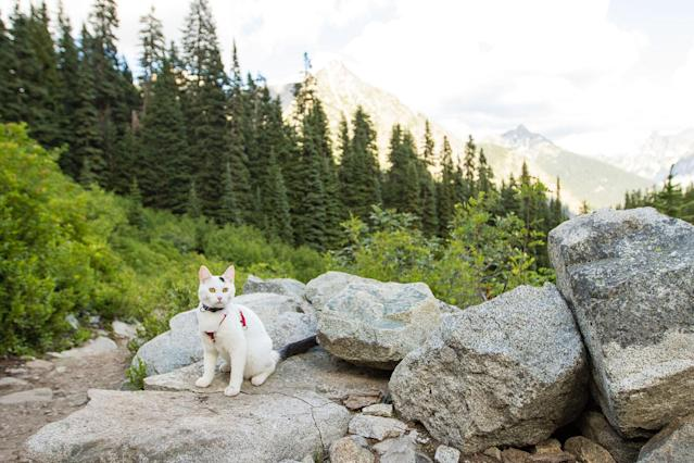 <p>Off-leash hike outside of North Cascades National Park in northern Washington State. (Photo: Our Vie / Caters News) </p>