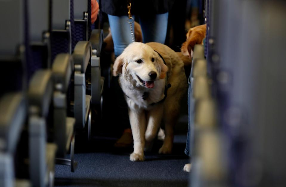 US airlines can ban emotional support animals from flights (AP)