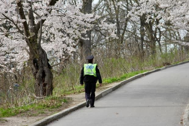 High Park cherry blossoms in bloom on 27 Apr 2021. Again this year, the city has fenced-off the blossoming trees due to COVID-19. See Toronto Police Officer walking along empty path,