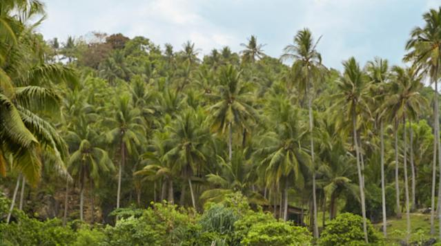<p>Chrissy Teigen was photographed by James Macari in Sumba Island.</p>