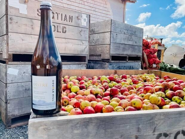 The hunt is on for the ideal cider apple. But to find it, researchers at Double Hill Cidery are sampling one from every tree they can find.  (Sheehan Desjardins/CBC News - image credit)