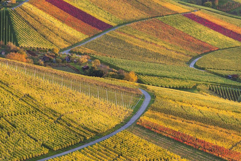 """<p>Rows of yellow, orange, and red vines make <a href=""""https://fave.co/2R1zlT9"""" rel=""""nofollow noopener"""" target=""""_blank"""" data-ylk=""""slk:Stuttgart, Germany"""" class=""""link rapid-noclick-resp"""">Stuttgart, Germany</a>'s wine country look even more stunning.</p>"""