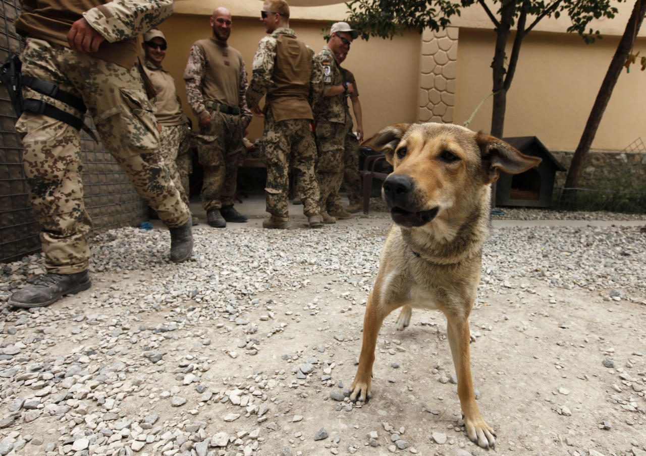German Bundeswehr army soldiers of the International Security Assistance Force (ISAF) gather behind a dog called Gina in their recreation area inside the German army camp in Toloqan, west of Kunduz, May 2, 2010.  REUTERS/Fabrizio Bensch (AFGHANISTAN - Tags: MILITARY)