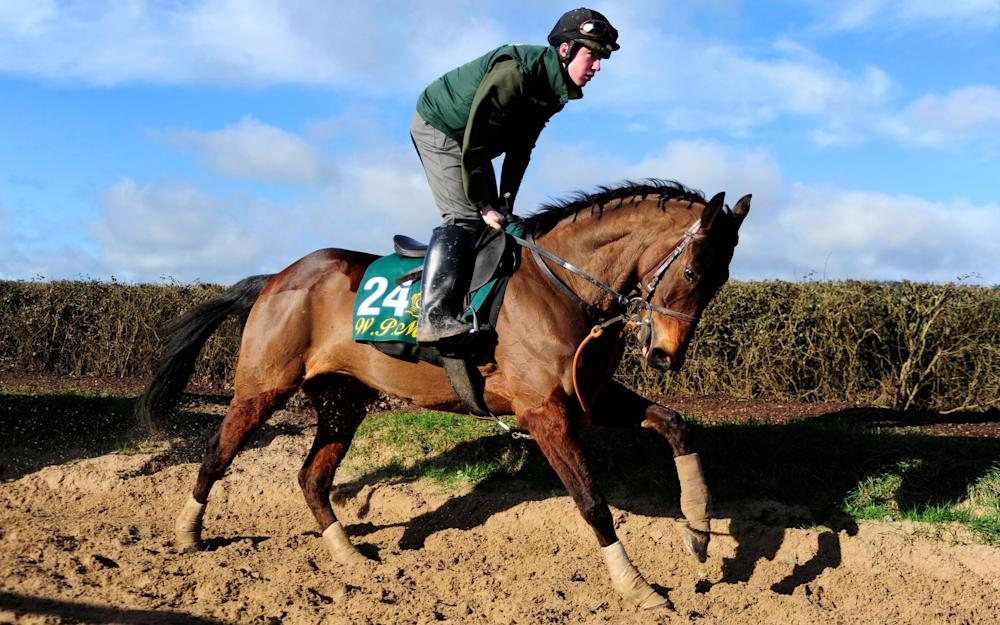 Airlie Beach on the gallops at Willie Mullins' stables at Closutton - Credit: PA Wire