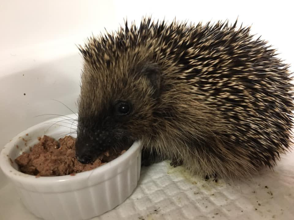 Photo credit: Spike's Hedgehog Food