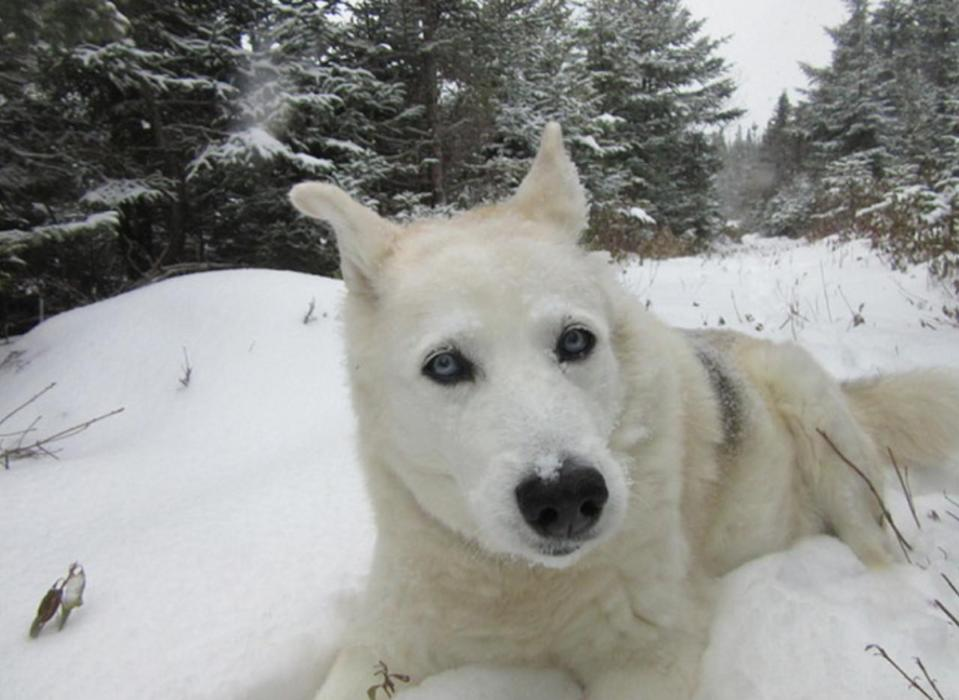 A dog's life in NFLD: how the late Nukka became our unofficial mascot