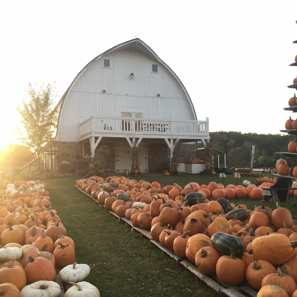 """<p><strong>Rice Lake, Wisconsin</strong></p><p>Caramel apples, anyone? You can snack on delectable treats as you search for your pumpkin of choice at <a href=""""https://www.ricelakepumpkinpatch.com/"""" rel=""""nofollow noopener"""" target=""""_blank"""" data-ylk=""""slk:Mommsen's Harvest Hills Pumpkin Patch & Apple Orchard"""" class=""""link rapid-noclick-resp""""><strong>Mommsen's Harvest Hills Pumpkin Patch & Apple Orchard</strong></a>. Harvest Hills is also known for its pumpkin artillery, and they say their """"infantry"""" includes two medieval catapults, a pumpkin cannon, and an apple shooter. The day pass — which includes their hayrides, petting farm, and maze — is $15 per person, and children under 2 years old are free of charge.</p>"""