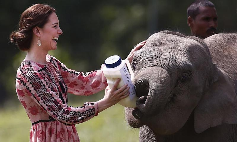 The Duchess of Cambridge is due to attend a cocktail and canape send-off to help save elephants.