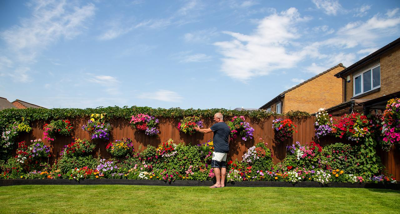 Meet the amateur gardener who fills more than 100 hanging baskets and pots in his small suburban garden with nearly 1,000 stunning plants every year. Shaun Schroeder, 57, spends up to three hours a day planting, tending, dead-heading and watering his stunning collection of petunias and other assorted flowers. He spends four months growing almost all of his 900 plants from seed, before potting them out in May, during a mammoth week-long planting session. They sprawl across 120 hanging baskets and tubs that cover every inch of his modest 4m wide garden at the back of his semi detached home in Whitchurch, on the outskirts of Bristol.