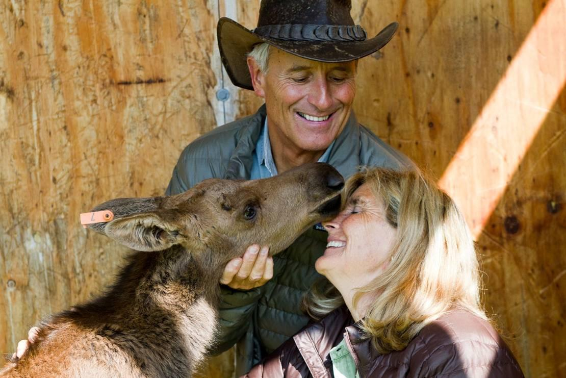My wife, Suzi, is a true animal lover – one of my favorite things about her. While visiting the Alaska Zoo she really bonded with an orphaned moose calf.