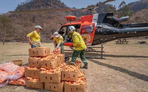 Helicopters have been loaded with carrots and sweet potato for a food drop to help wildlife - Credit: HANDOUT/EPA-EFE/REX